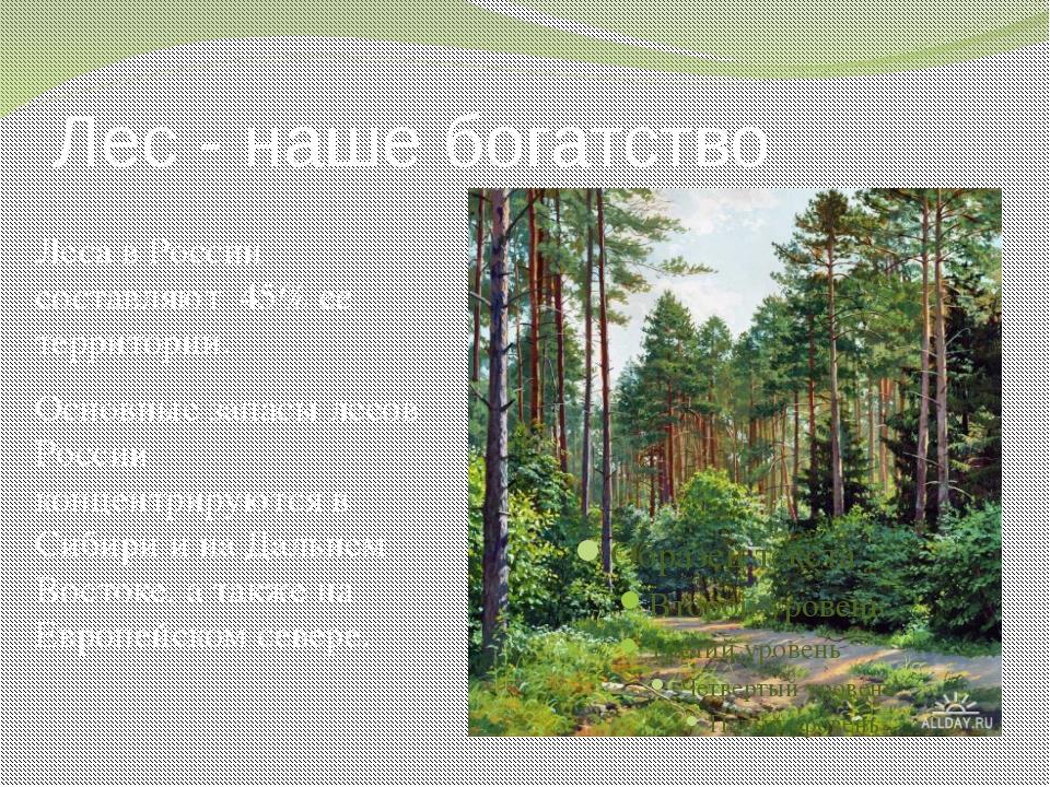Лес - наше богатство Леса в России составляют 45% ее территории. Основные зап...