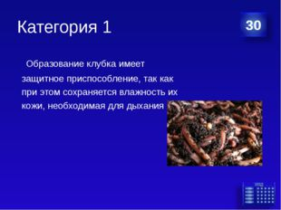Категория 1 Образование клубка имеет защитное приспособление, так как при эт