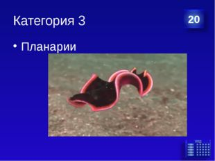 Категория 3 Планарии