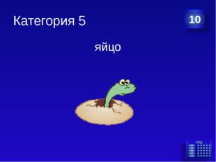 Категория 5 яйцо