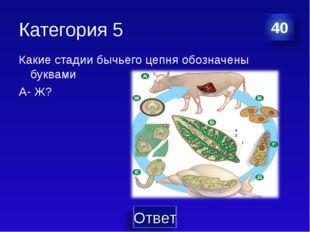 Категория 5 Какие стадии бычьего цепня обозначены буквами А- Ж?