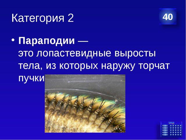 Категория 2 Параподии— этолопастевидные выросты тела, из которых наружу тор...