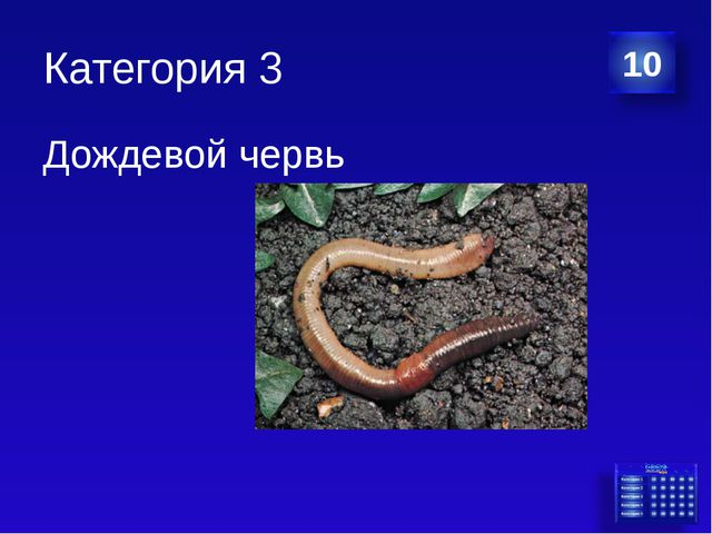 Категория 3 Дождевой червь