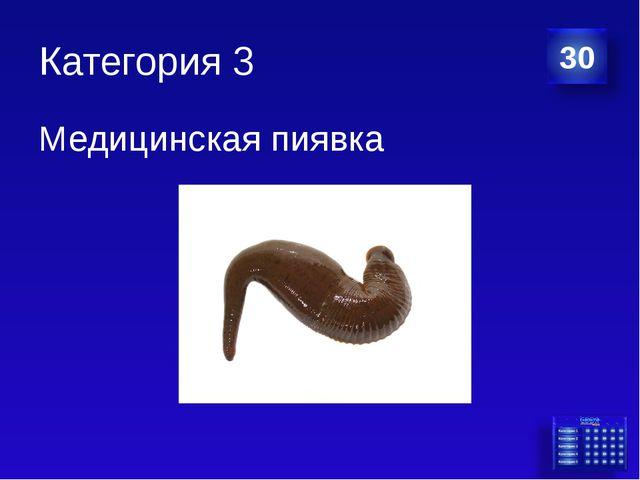 Категория 3 Медицинская пиявка