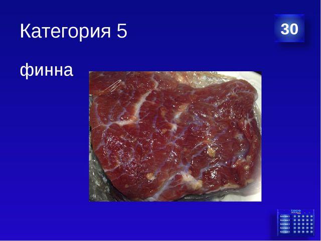Категория 5 финна