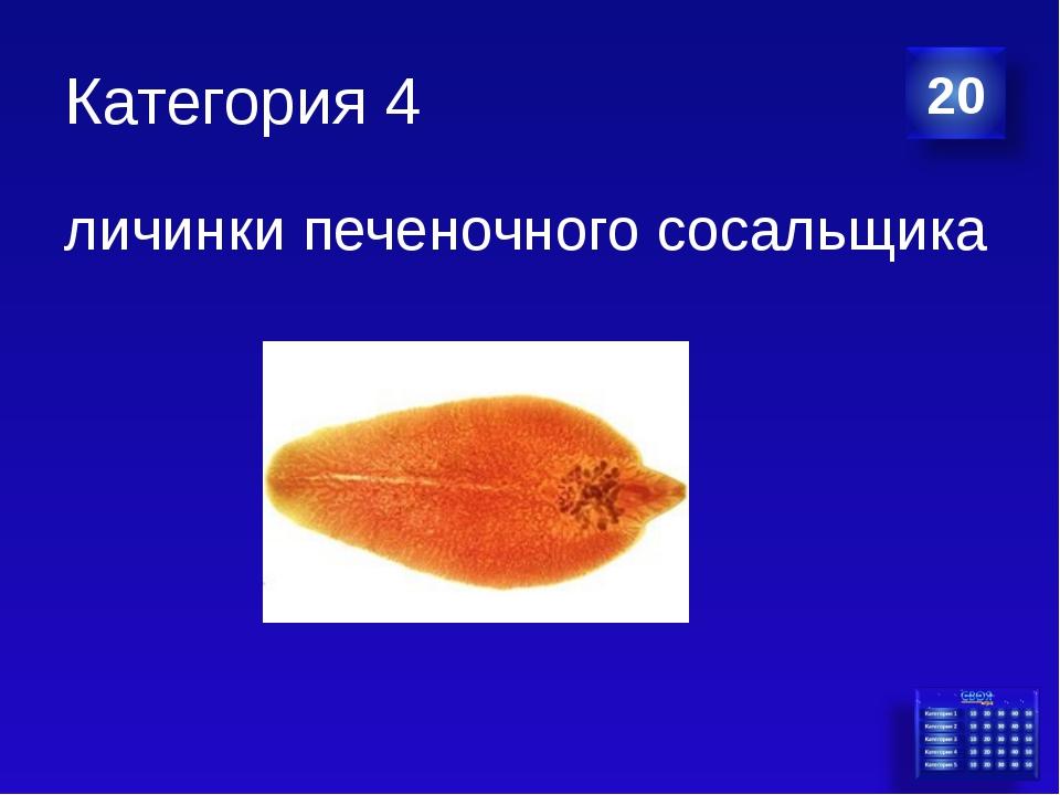 Категория 4 личинки печеночного сосальщика
