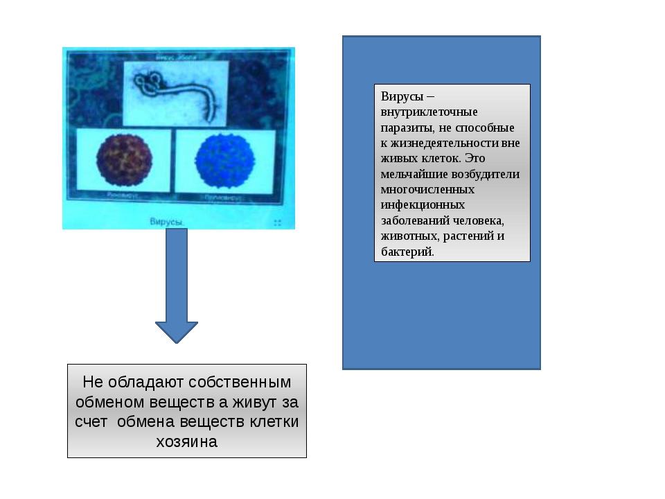 Вирусы – внутриклеточные паразиты, не способные к жизнедеятельности вне живы...