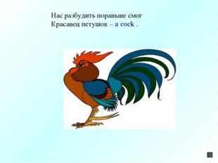 Нас разбудить пораньше смог Красавец петушок – a cock .
