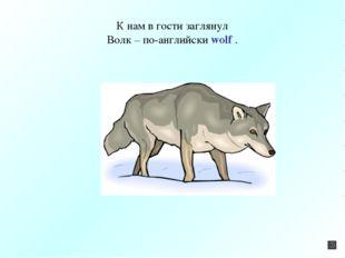 К нам в гости заглянул Волк – по-английски wolf .