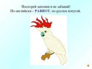 Поскорей запомни и не забывай! По-английски – PARROT, по-русски попугай.