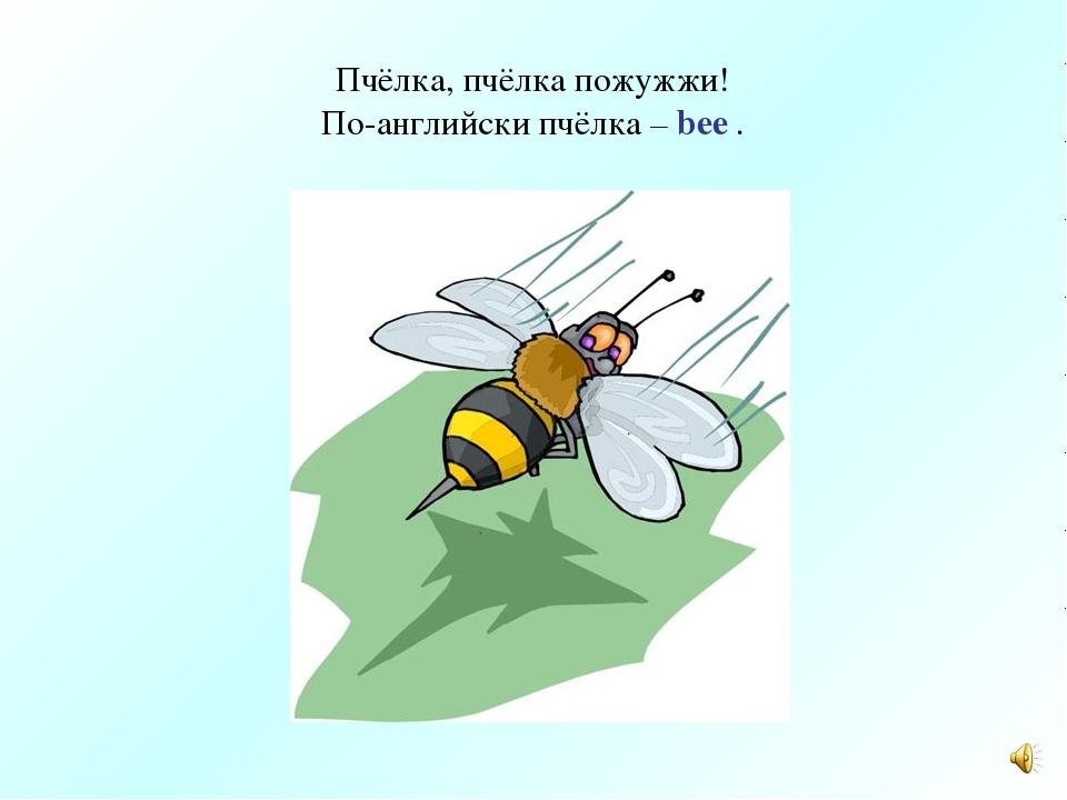 Пчёлка, пчёлка пожужжи! По-английски пчёлка – bee .