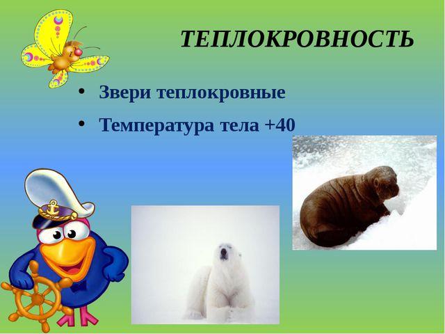 ТЕПЛОКРОВНОСТЬ Звери теплокровные Температура тела +40
