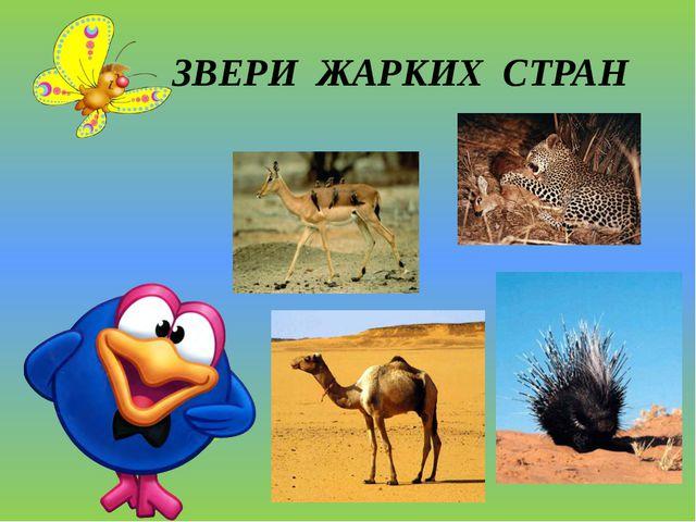 ЗВЕРИ ЖАРКИХ СТРАН