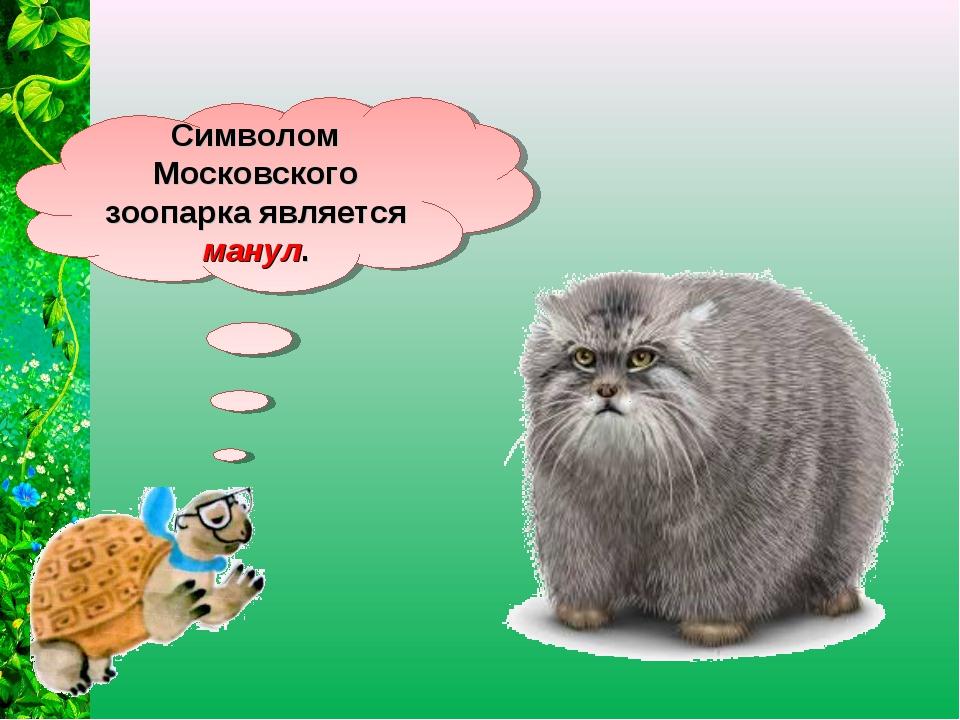 Символом Московского зоопарка является манул.