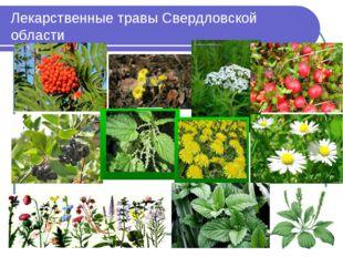 Лекарственные травы Свердловской области