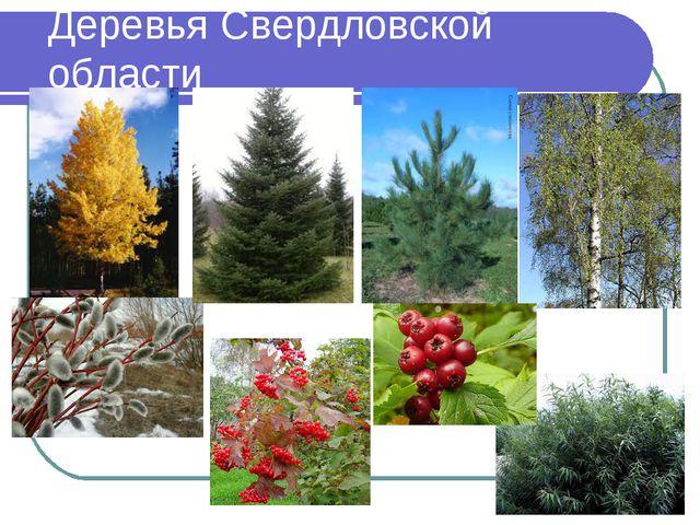 Деревья Свердловской области