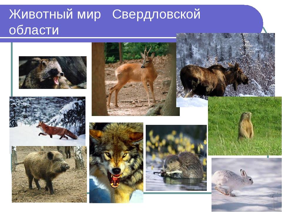 Животный мир Свердловской области