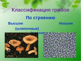 Классификация грибов По строению Высшие Низшие (шляпочные) (плесневые)