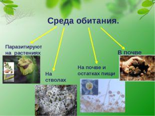 В почве Среда обитания. Паразитируют на растениях На стволах деревьев На почв