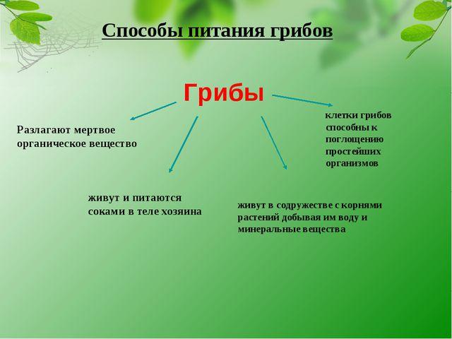Способы питания грибов Грибы Разлагают мертвое органическое вещество живут и...