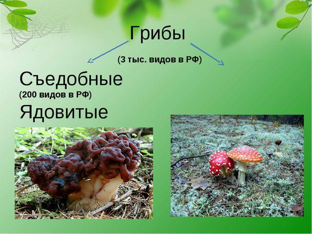 Грибы (3 тыс. видов в РФ) Съедобные (200 видов в РФ) Ядовитые