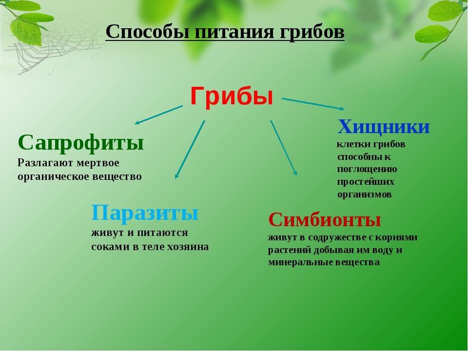 Способы питания грибов Грибы Сапрофиты Разлагают мертвое органическое веществ...