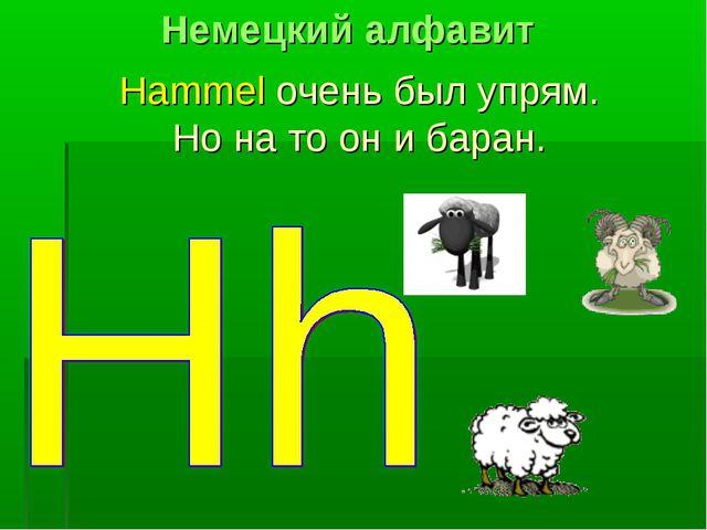 Hammel очень был упрям. Но на то он и баран. Немецкий алфавит