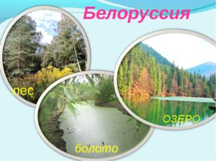 Белоруссия болото лес ОЗЕРО