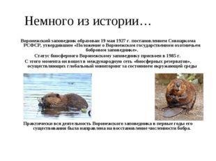 Немного из истории… Воронежский заповедник образован 19 мая 1927 г. постановл