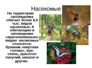 Насекомые На территории заповедника обитает более 6,5 тыс. видов насекомых. К