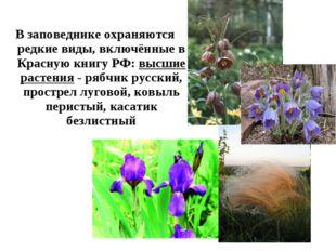 В заповеднике охраняются редкие виды, включённые в Красную книгу РФ: высшие р