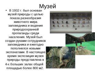 Музей В 1932 г. был основан музей природы с целью показа разнообразия животно