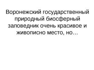 Воронежский государственный природный биосферный заповедник очень красивое и