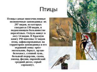 Птицы Птицы-самые многочисленные позвоночные заповедника: их 297 видов, из ко