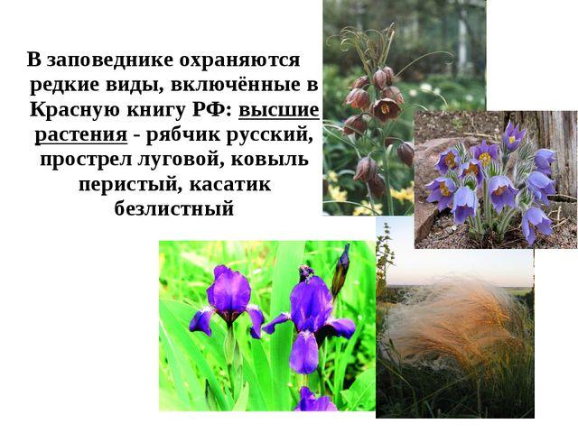 В заповеднике охраняются редкие виды, включённые в Красную книгу РФ: высшие р...