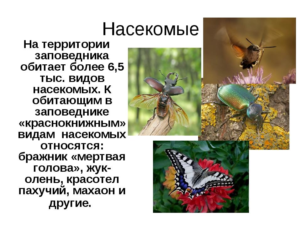 Насекомые На территории заповедника обитает более 6,5 тыс. видов насекомых. К...