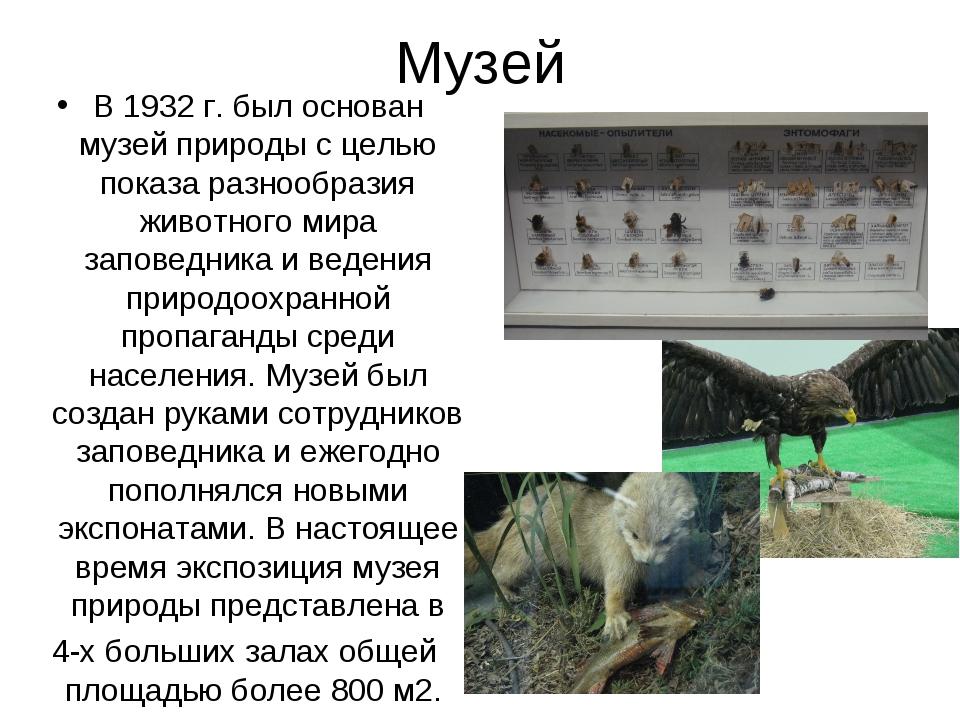 Музей В 1932 г. был основан музей природы с целью показа разнообразия животно...