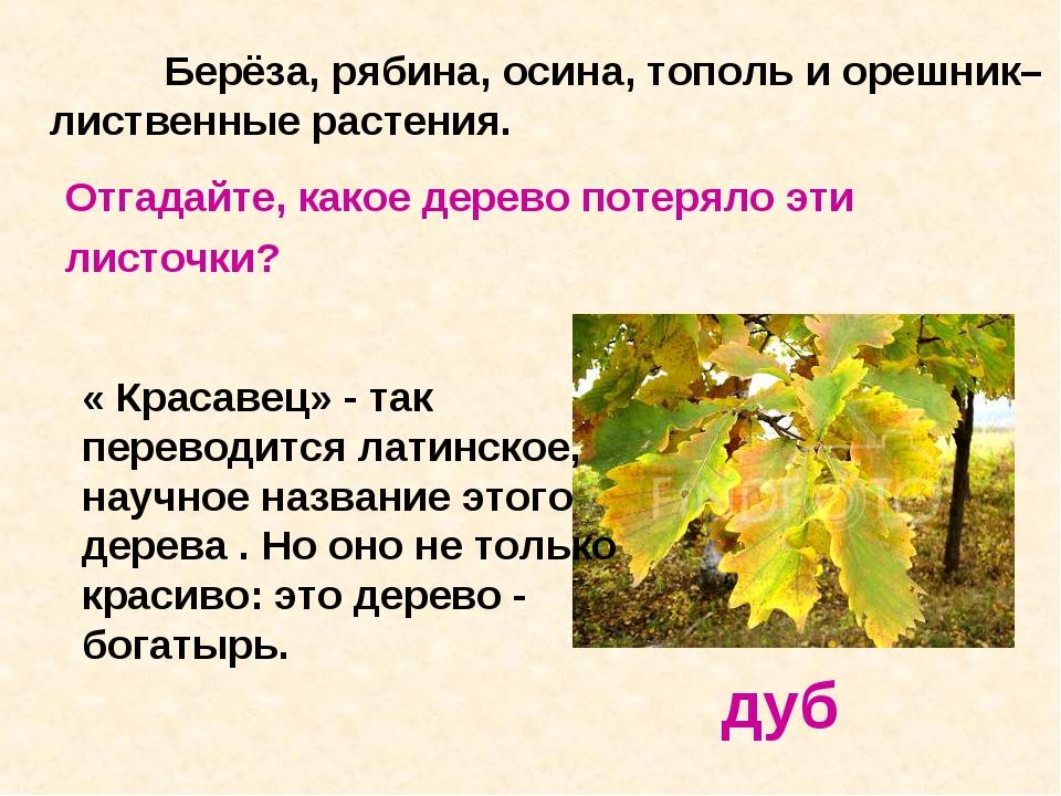 Берёза, рябина, осина, тополь и орешник– лиственные растения. дуб Отгадайте...
