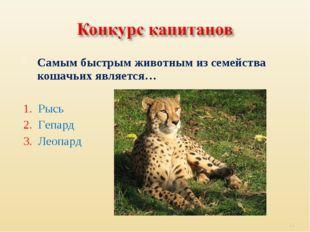 Самым быстрым животным из семейства кошачьих является… 1. Рысь 2. Гепард 3. Л