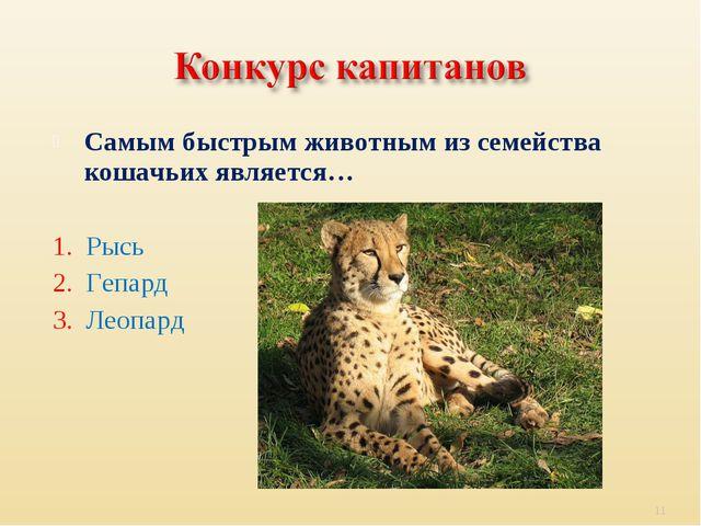 Самым быстрым животным из семейства кошачьих является… 1. Рысь 2. Гепард 3. Л...