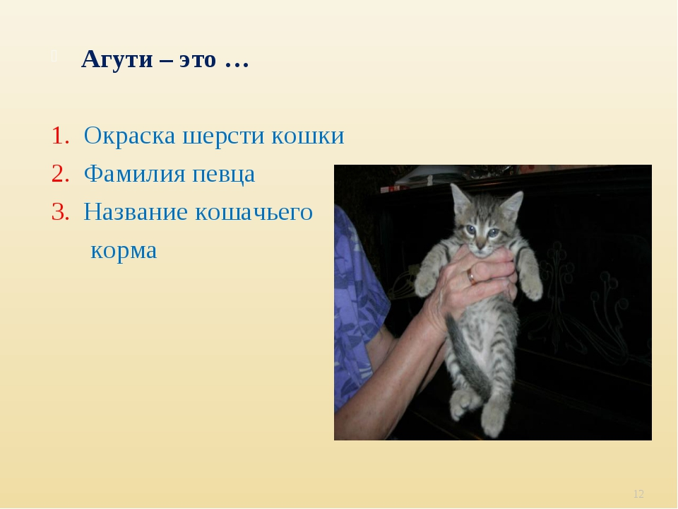 Агути – это … 1. Окраска шерсти кошки 2. Фамилия певца 3. Название кошачьего...