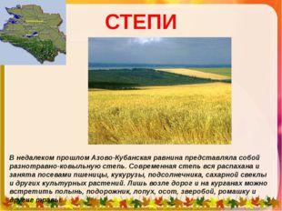 СТЕПИ В недалеком прошлом Азово-Кубанская равнина представляла собой разнотра