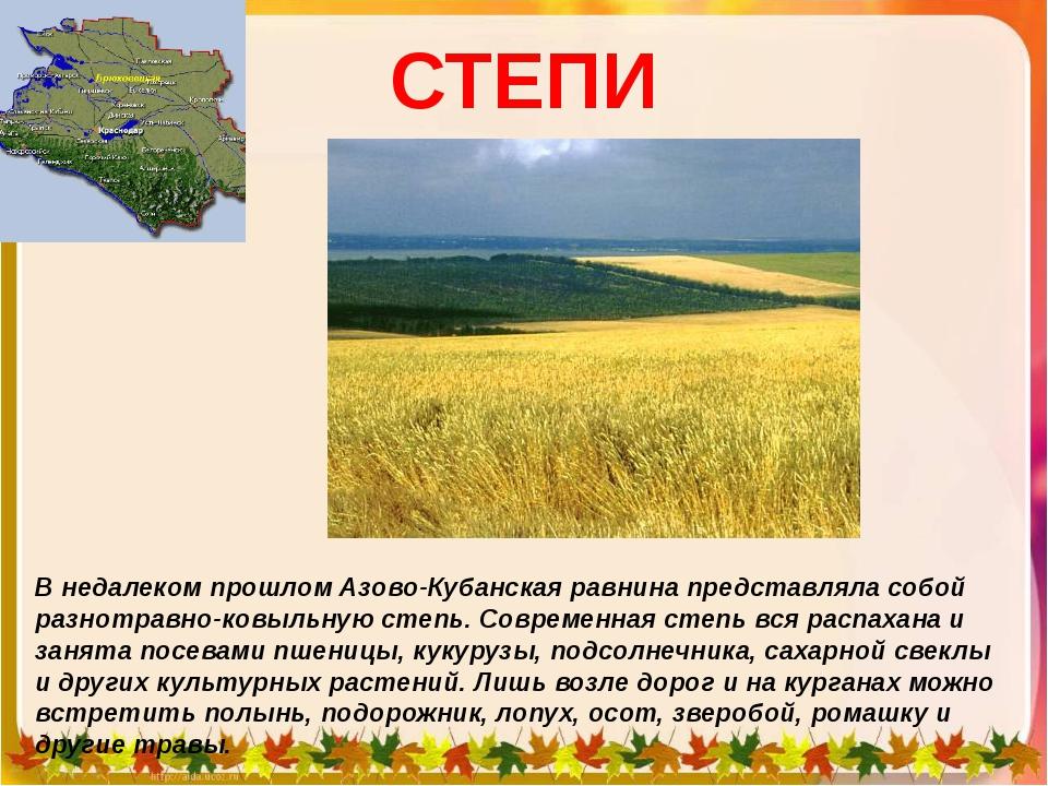 СТЕПИ В недалеком прошлом Азово-Кубанская равнина представляла собой разнотра...