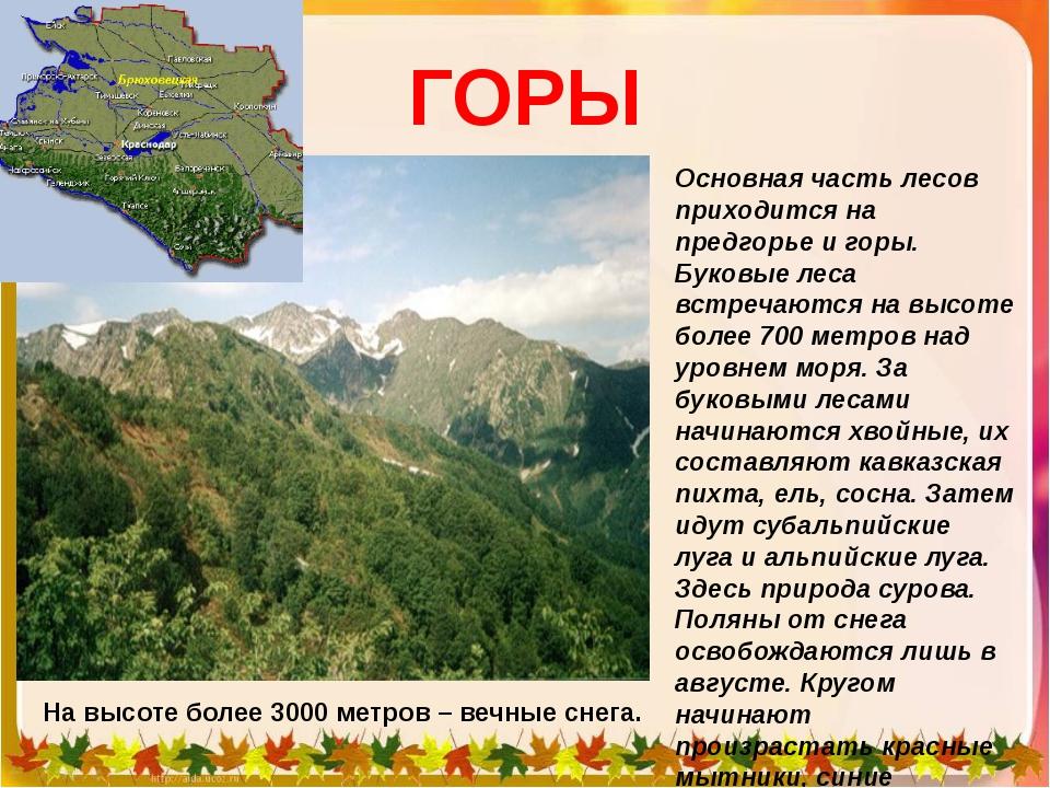 ГОРЫ Основная часть лесов приходится на предгорье и горы. Буковые леса встреч...