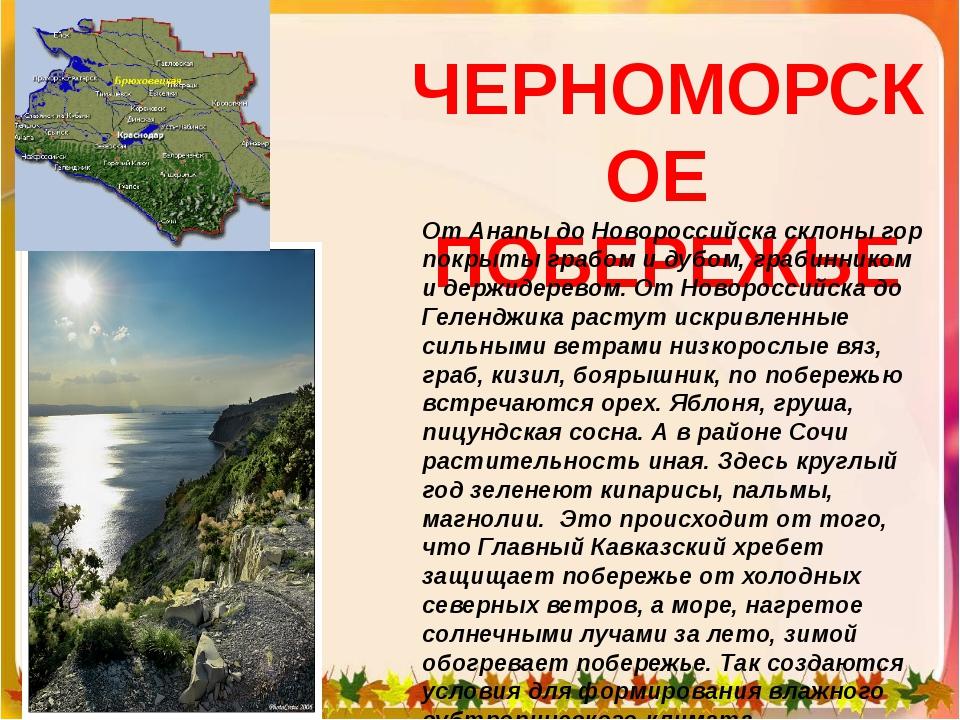 ЧЕРНОМОРСКОЕ ПОБЕРЕЖЬЕ От Анапы до Новороссийска склоны гор покрыты грабом и...