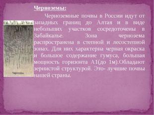 Черноземы: Черноземные почвы в России идут от западных границ до Алтая и в
