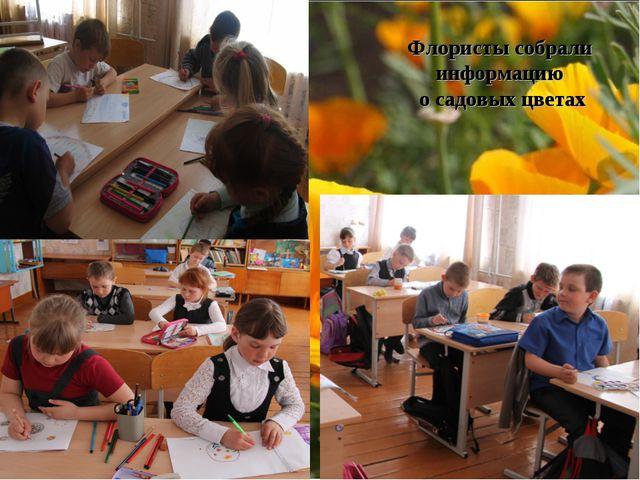 Флористы собрали информацию о садовых цветах