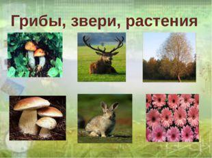 Грибы, звери, растения