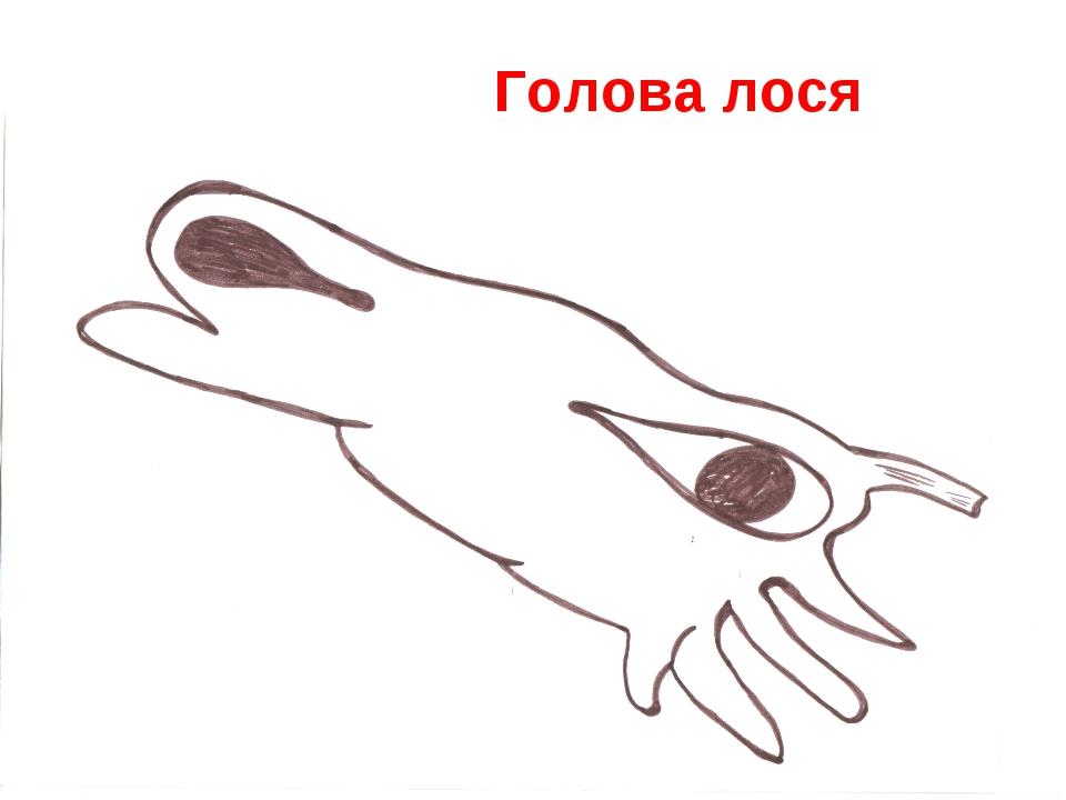 Самарина С.Н. * Голова лося Самарина С.Н.