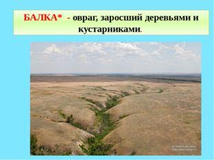 БАЛКА* - овраг, заросший деревьями и кустарниками.